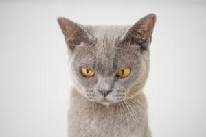 chat-pas-content