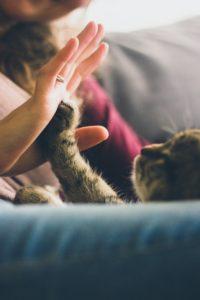 arrivee-bebe-chat-cohabitation