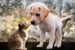 cohabitation-chat-chien