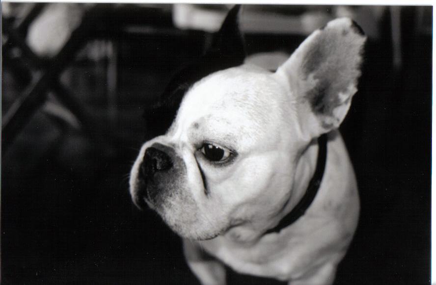 mon-chien-fait-des-betises