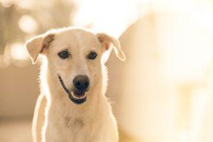 deroule-consultation-comportement-chien-2